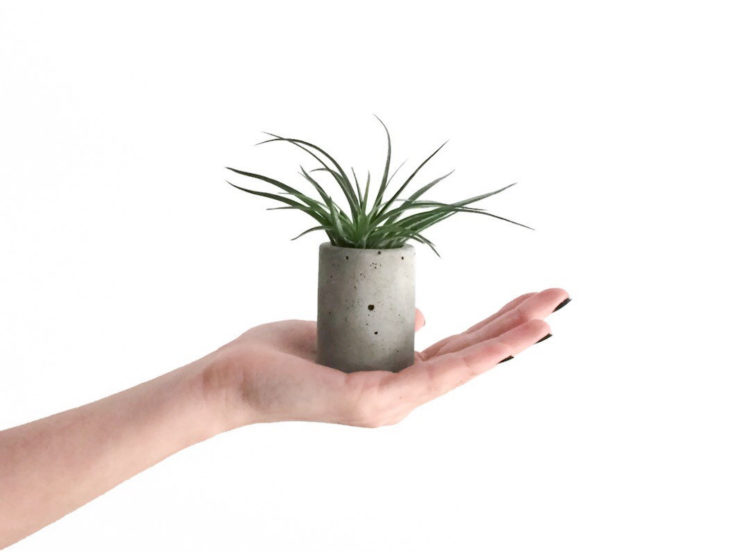 Mini Concrete Planter by Frae and Co